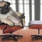 Modern dog loves his mini Eames Lounge and Ottoman by Vitra